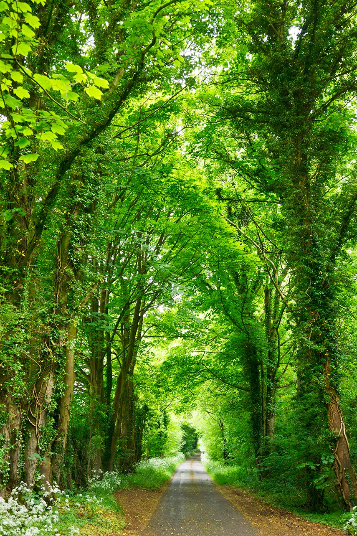 locandina green italia day